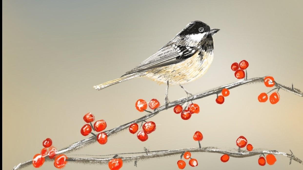 My bird - student project
