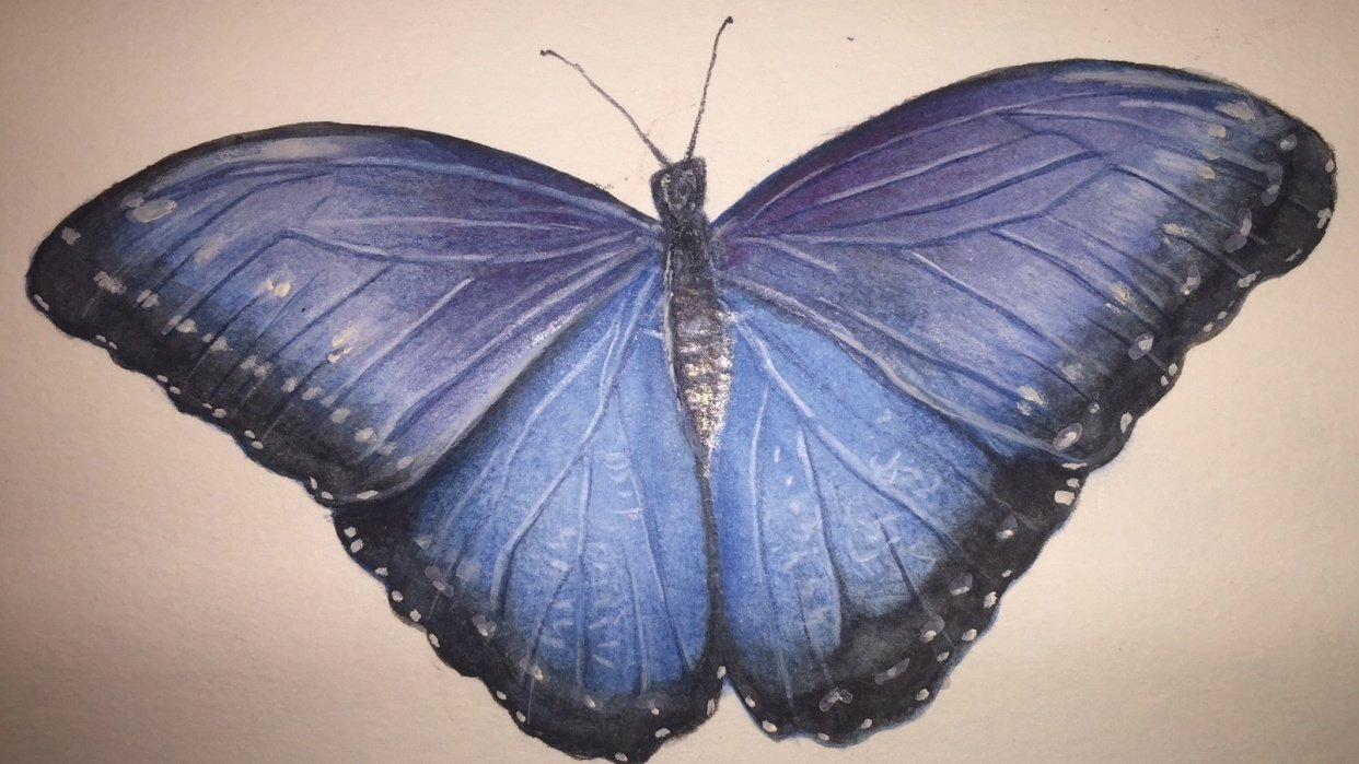 Watercolor Pencil Blue Morpho Butterfly - student project