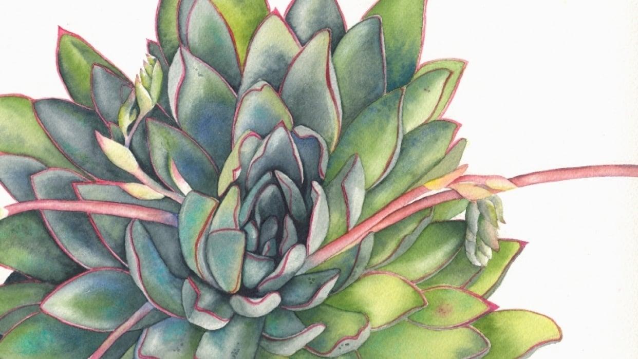 Louise De Masi's Watercolor Succulent Class - student project