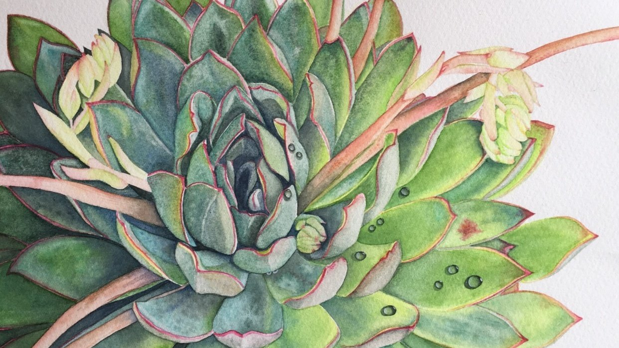 My Watercolor Succulent :) - student project