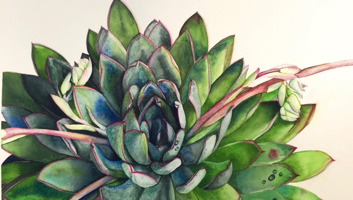Watercolor Succulent - student project