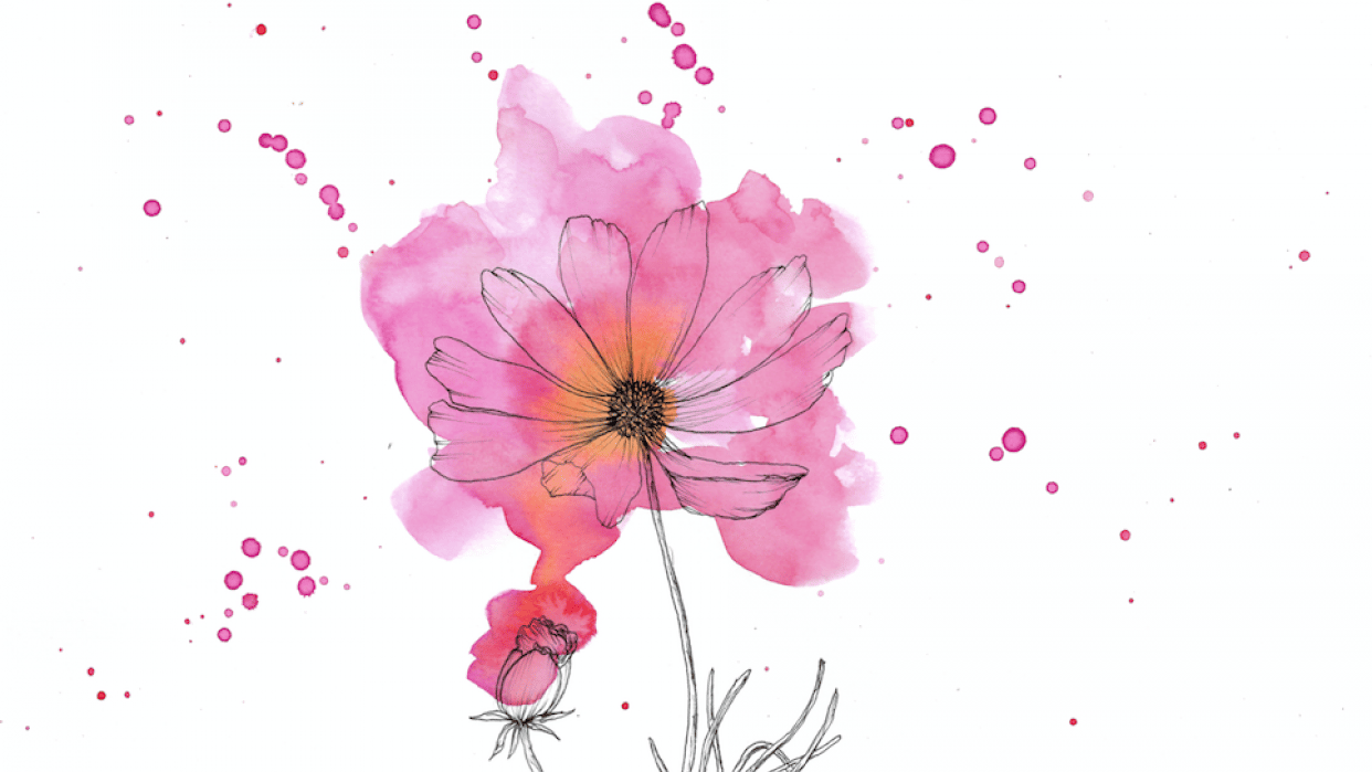 Modern Ink and Watercolor Floral: Cosmos! - student project