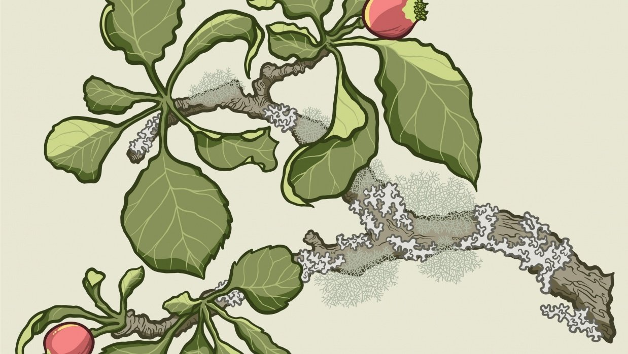 Inking project: Apple branch in apple forming stage - student project