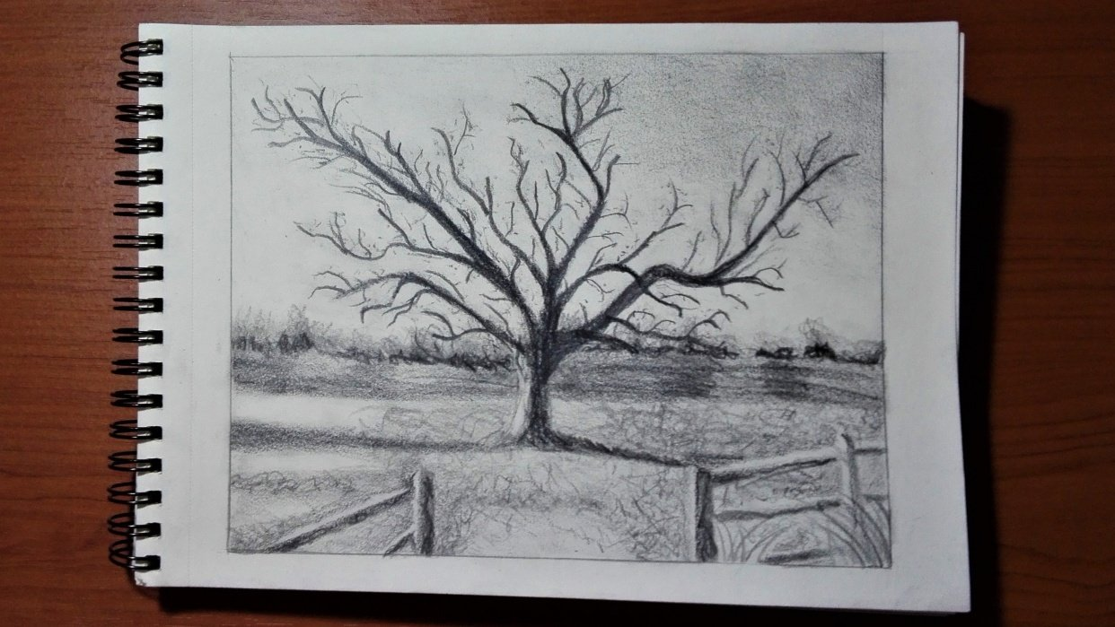 Tree Graphite Pencil Drawing - student project