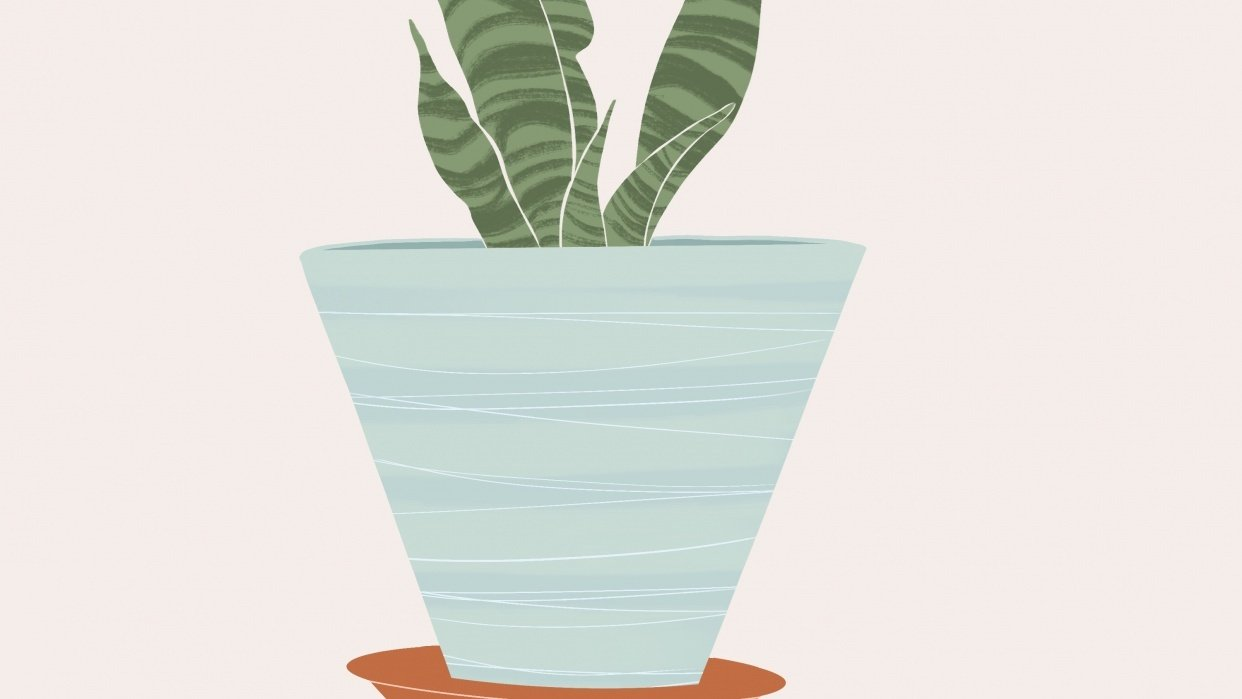My Snake plant:) - student project