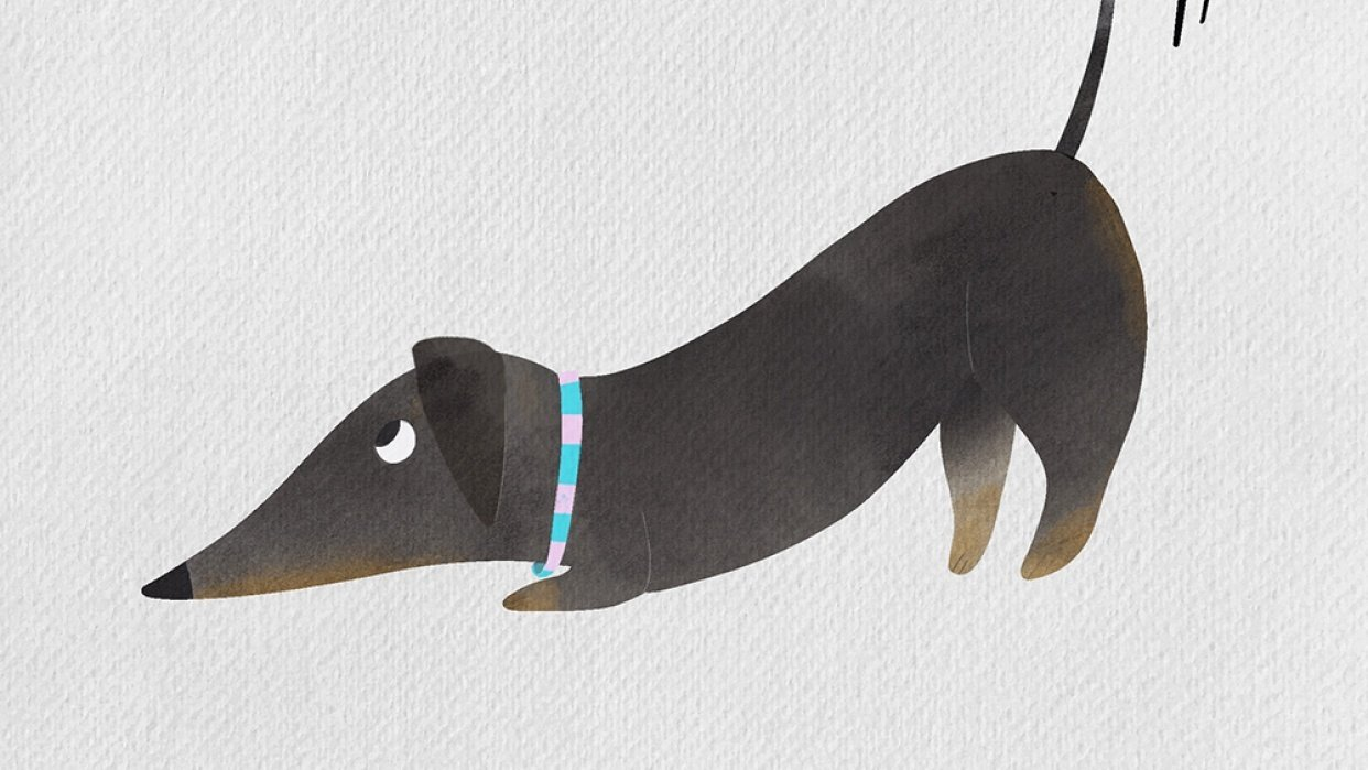 Little wagging Dachshund - student project