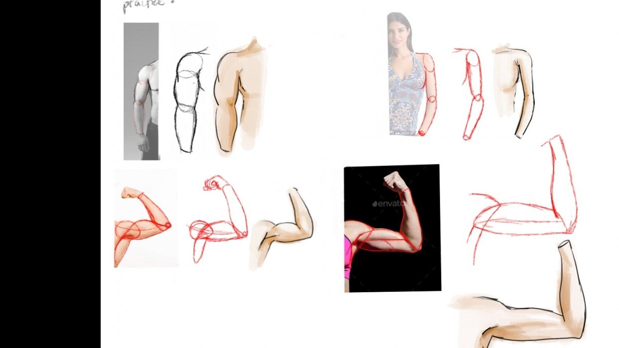 Anatomy Arms - student project