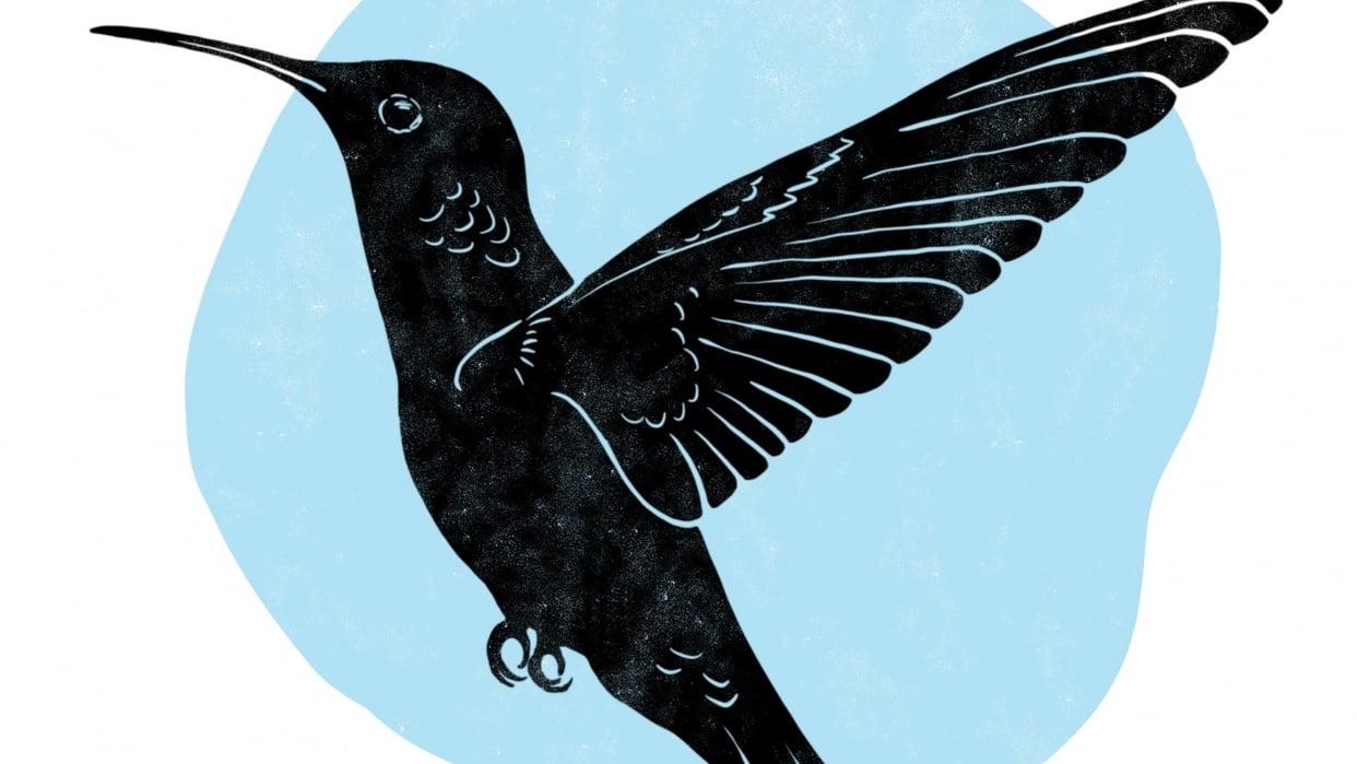 Hummingbird - student project