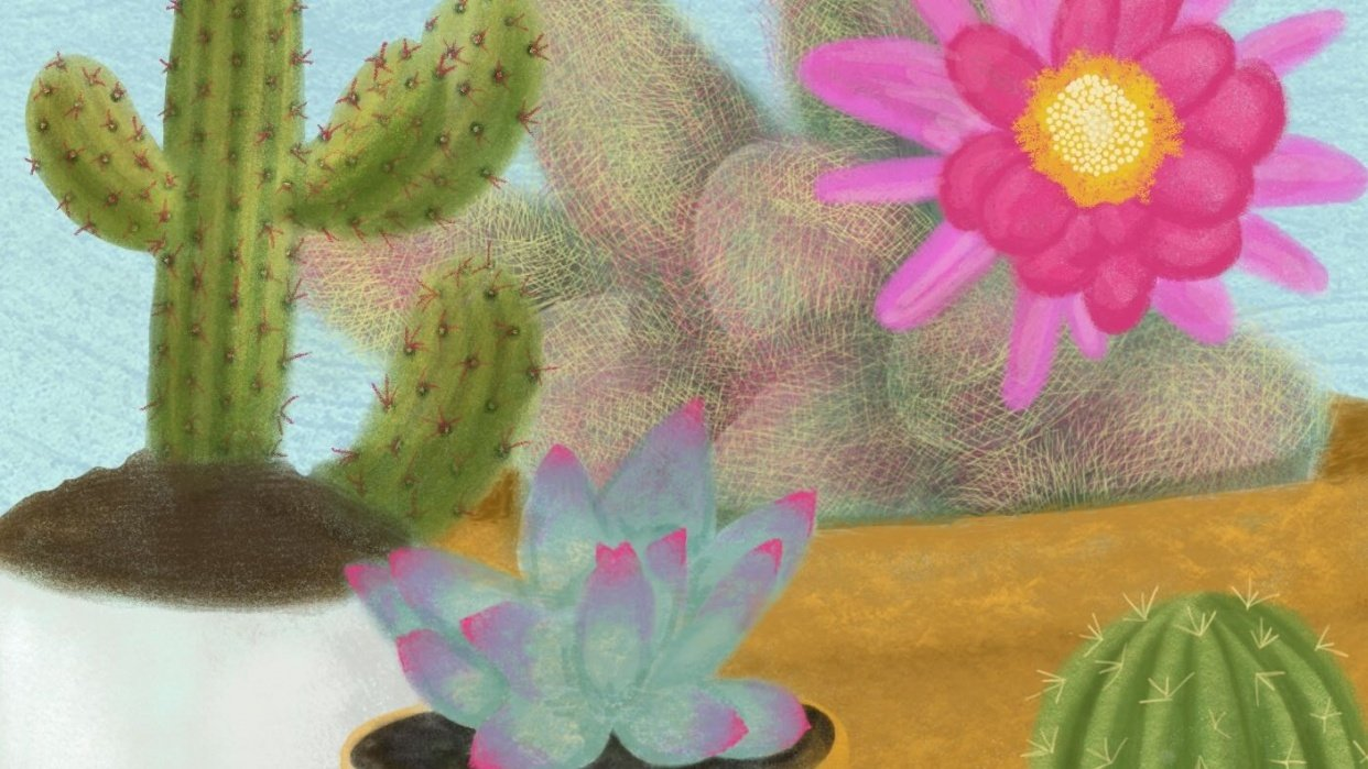 Cactus - student project