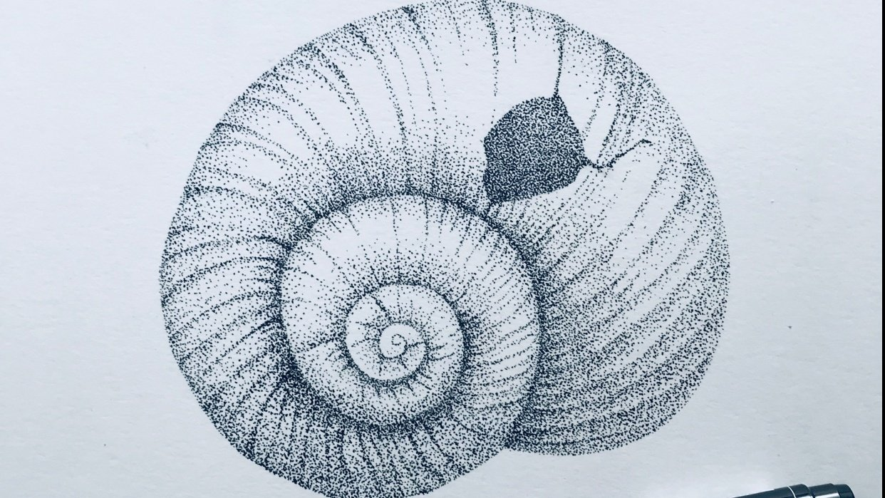 stippled shell - student project