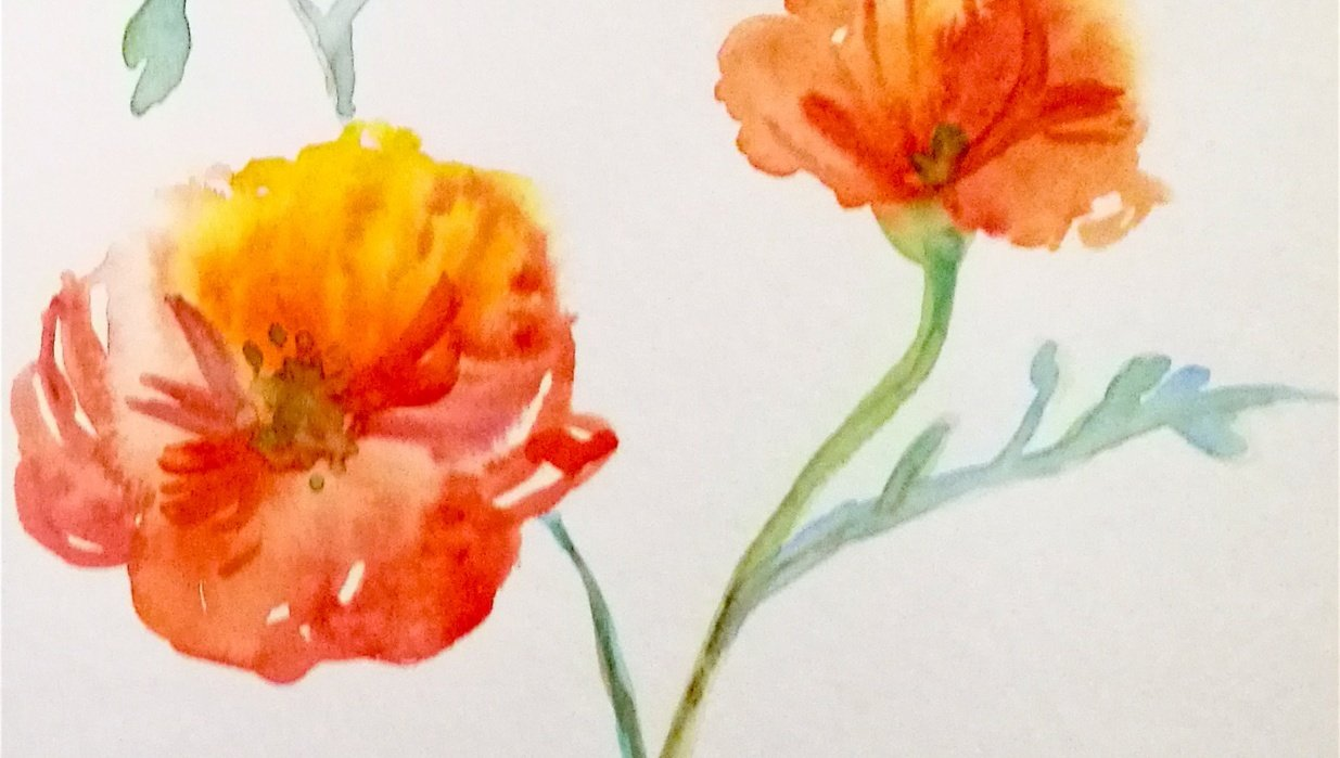 Loostly Painted Poppy - student project