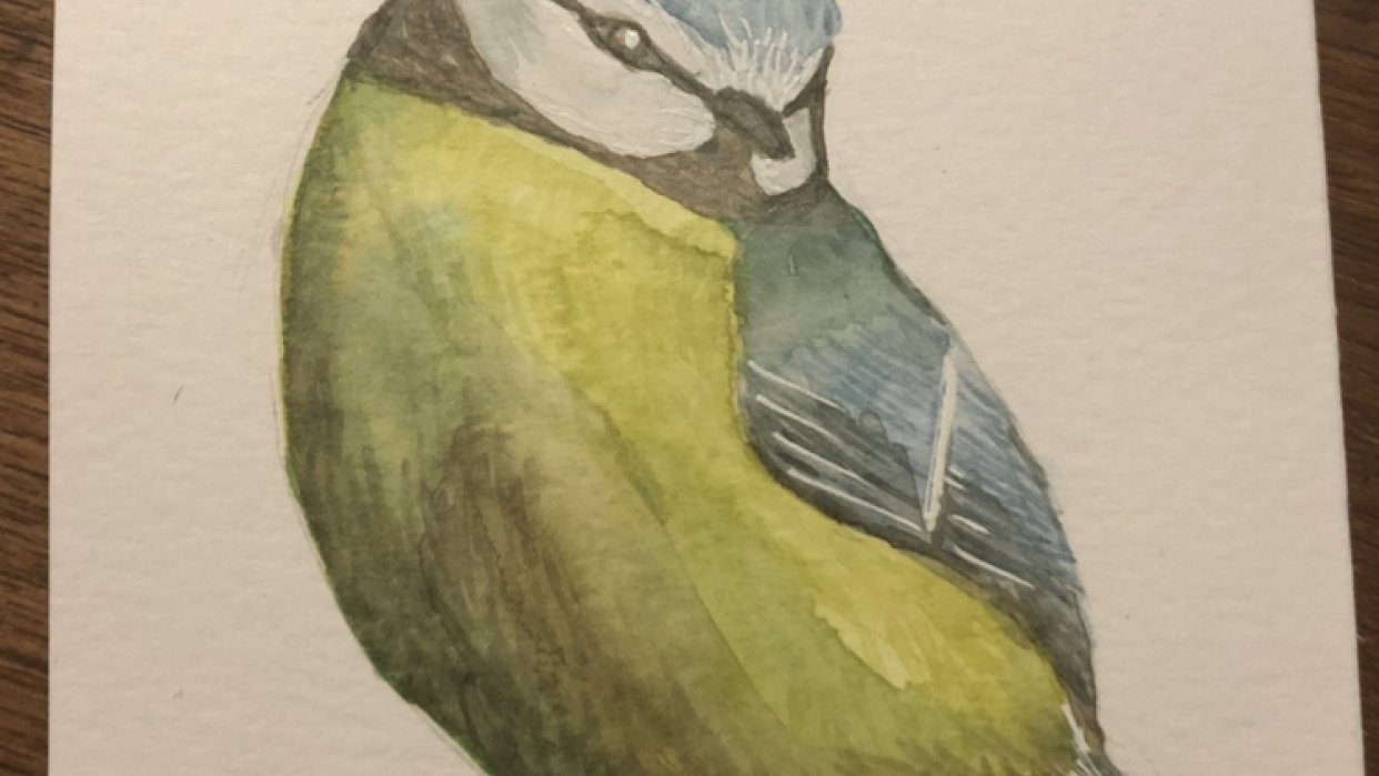 Blue Tit for Watercolor Birds class - student project