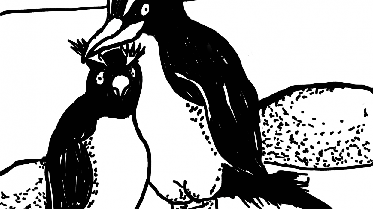 Crested Penguins - student project