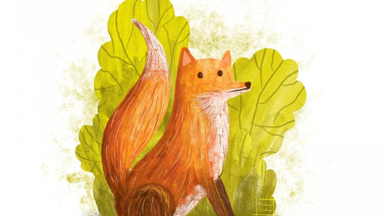 Red Fox Illustration - student project