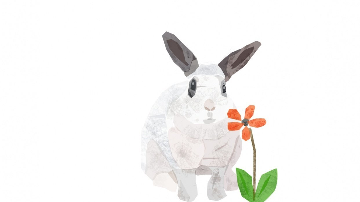 My Bunny - student project