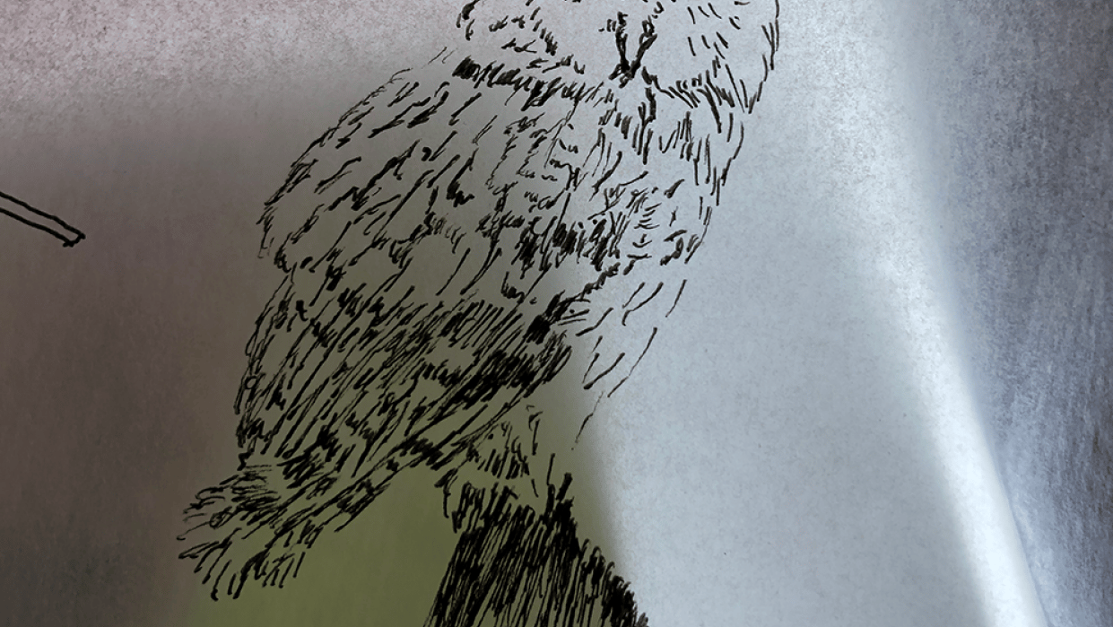 Playing with Owls - student project