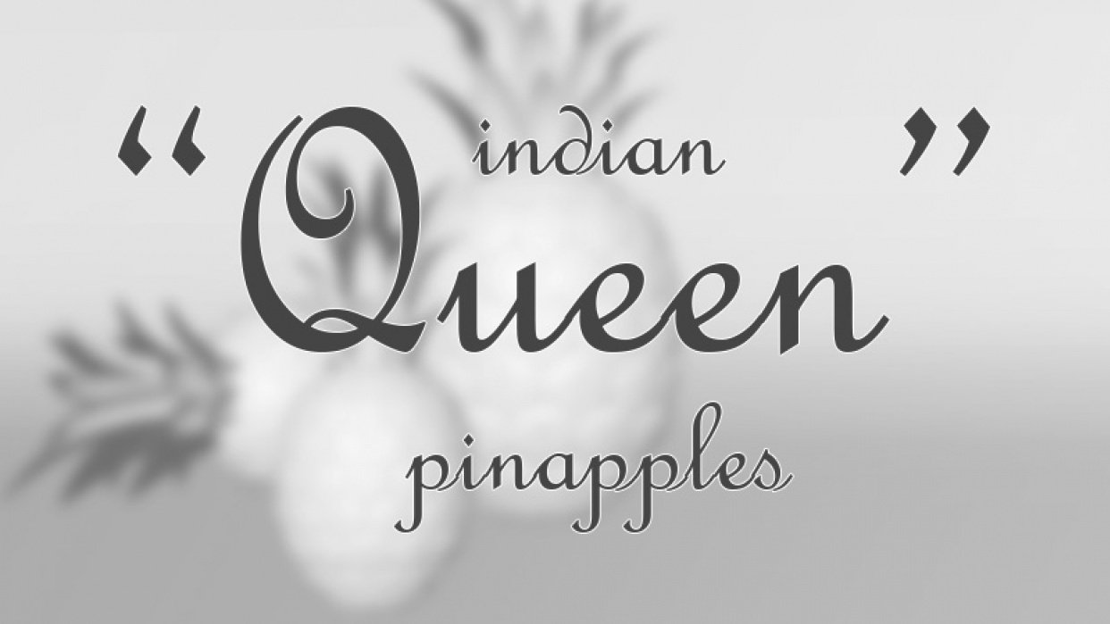 «Queen» Indian Pineapple - student project