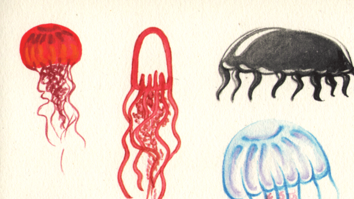 Jellyfish in different styles - student project