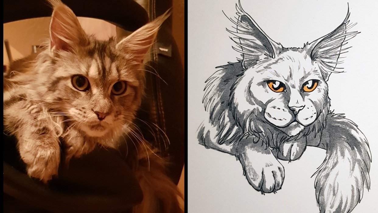 Sketchbook Cats - student project