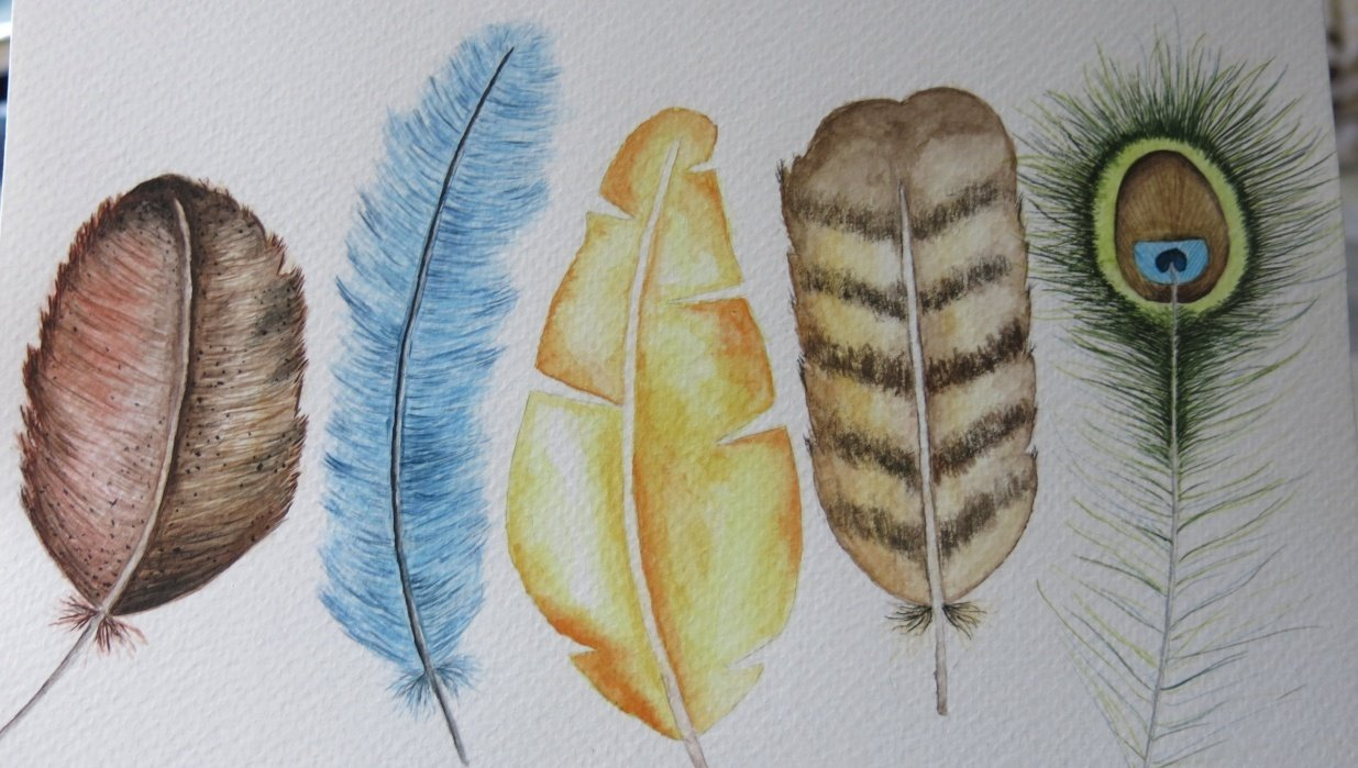 Feathers:D - student project