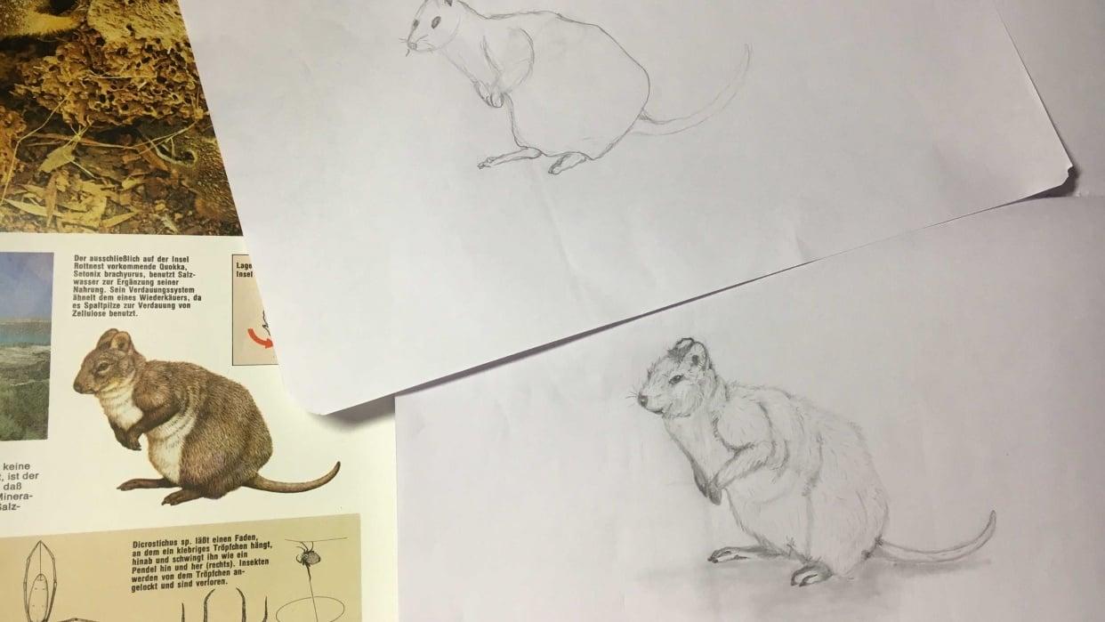 3 min animal - student project