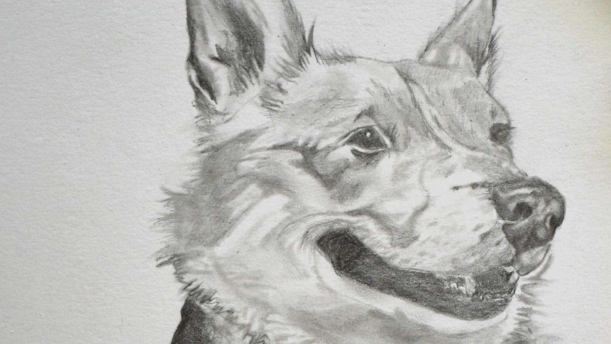 Corgi Drawing - student project