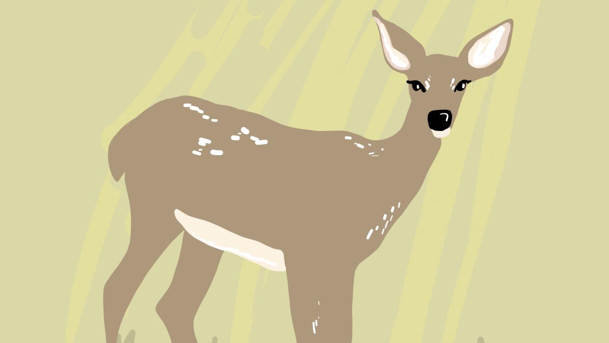 Deer vector illustration - student project