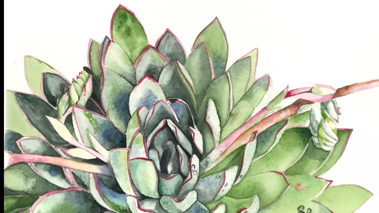 Succulent by Tipicactus - student project
