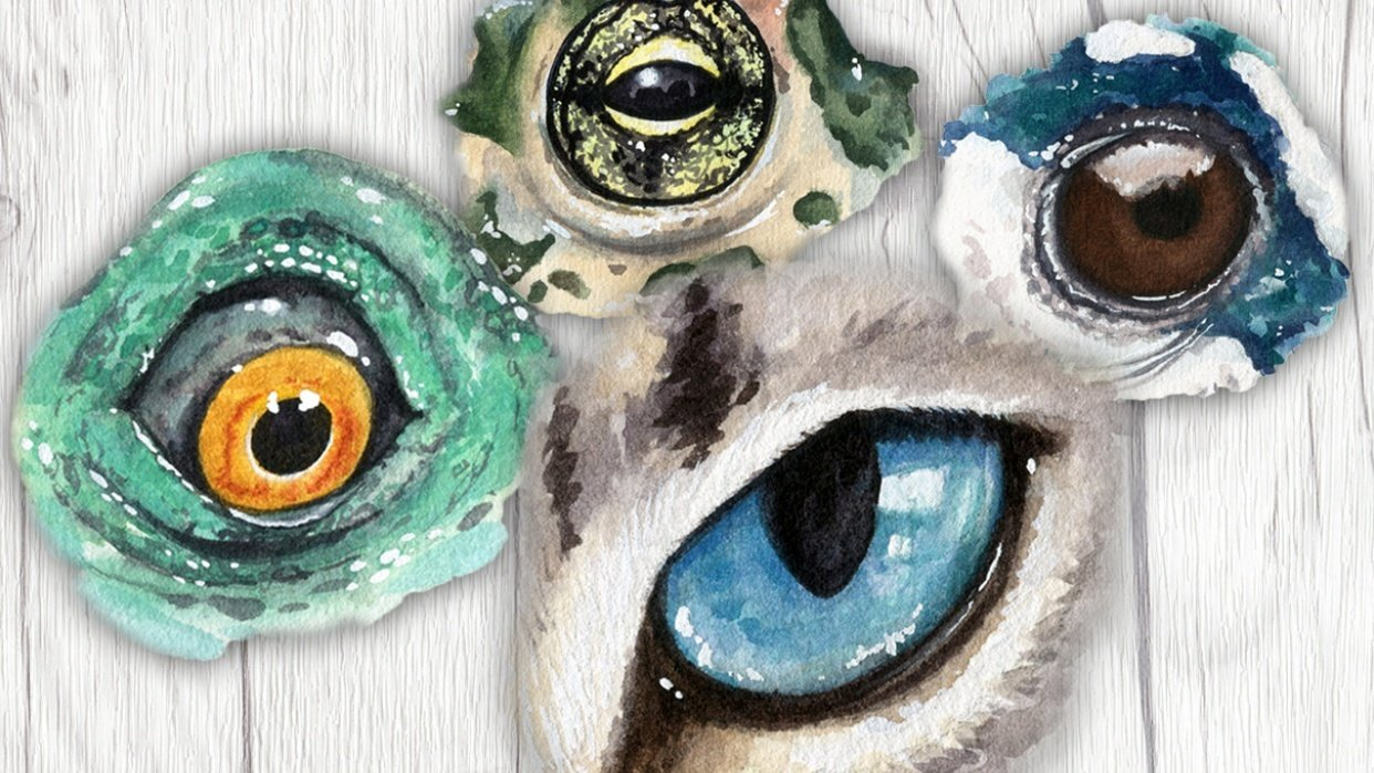 My Animal Eyes - student project