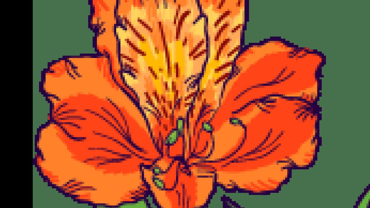 Astromelia flower - student project