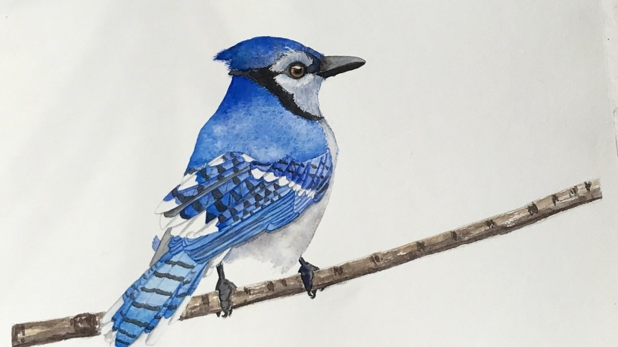 Blue Jay exercise - student project