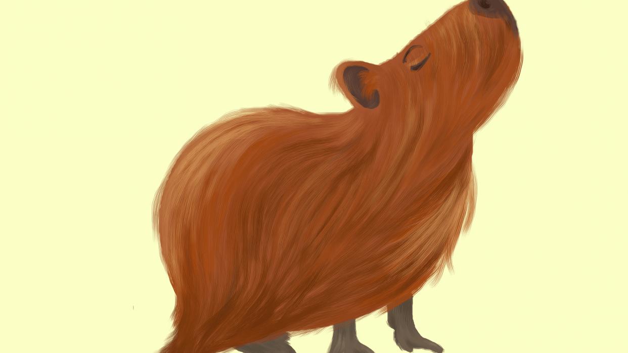 Capybara with attitude - student project