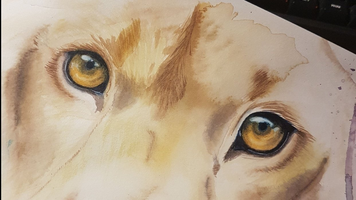 Lion eyes - student project