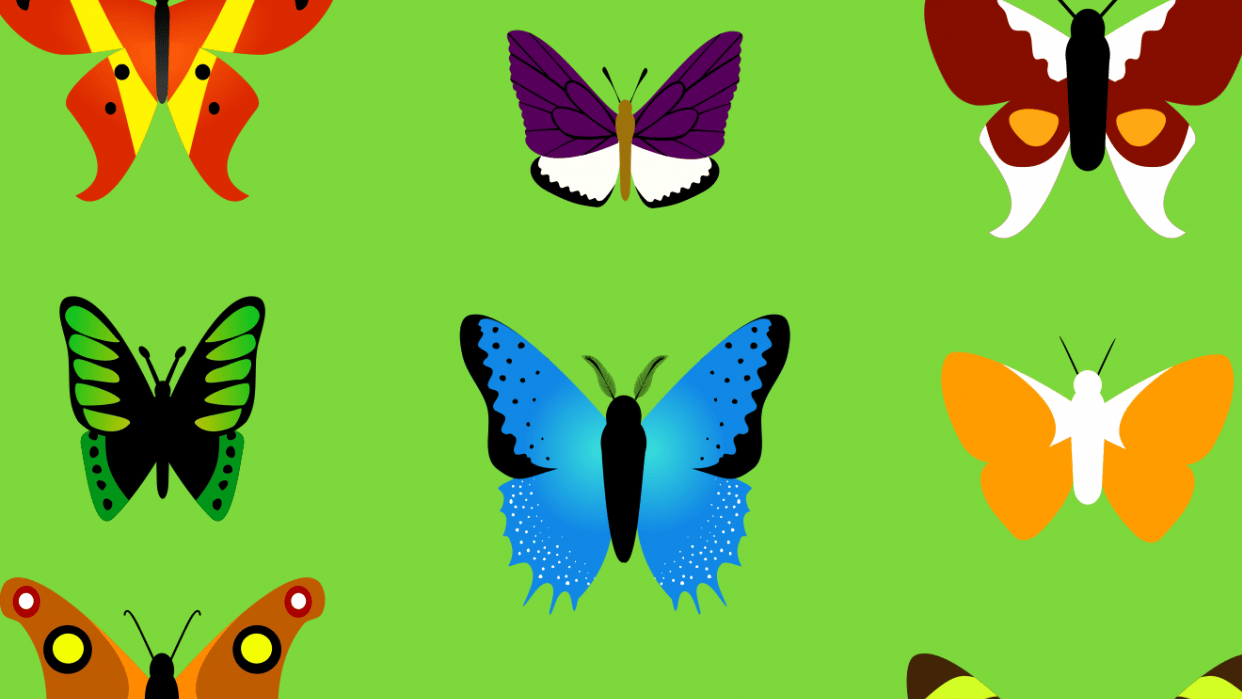 Butterfly collection - student project