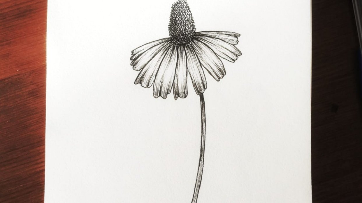 Coneflowers - student project