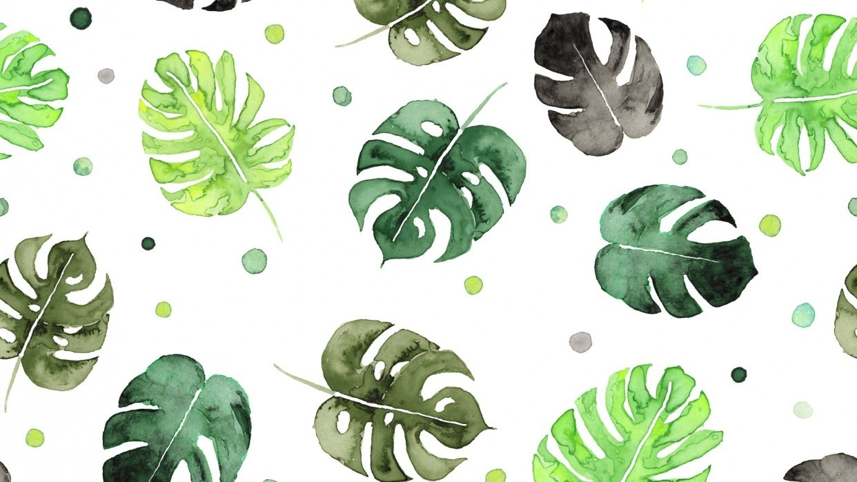 Monstera Bubble - student project