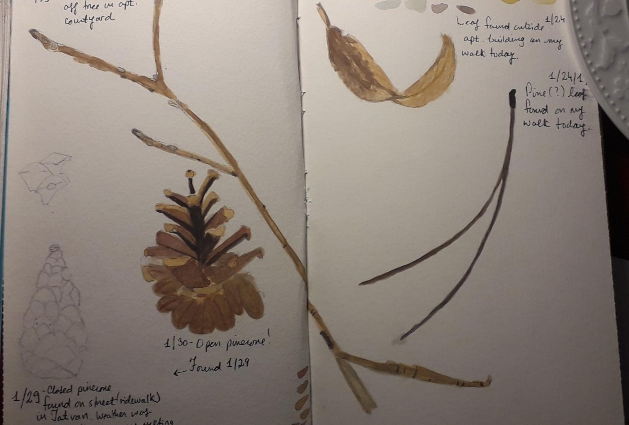 Updated nature journal - student project