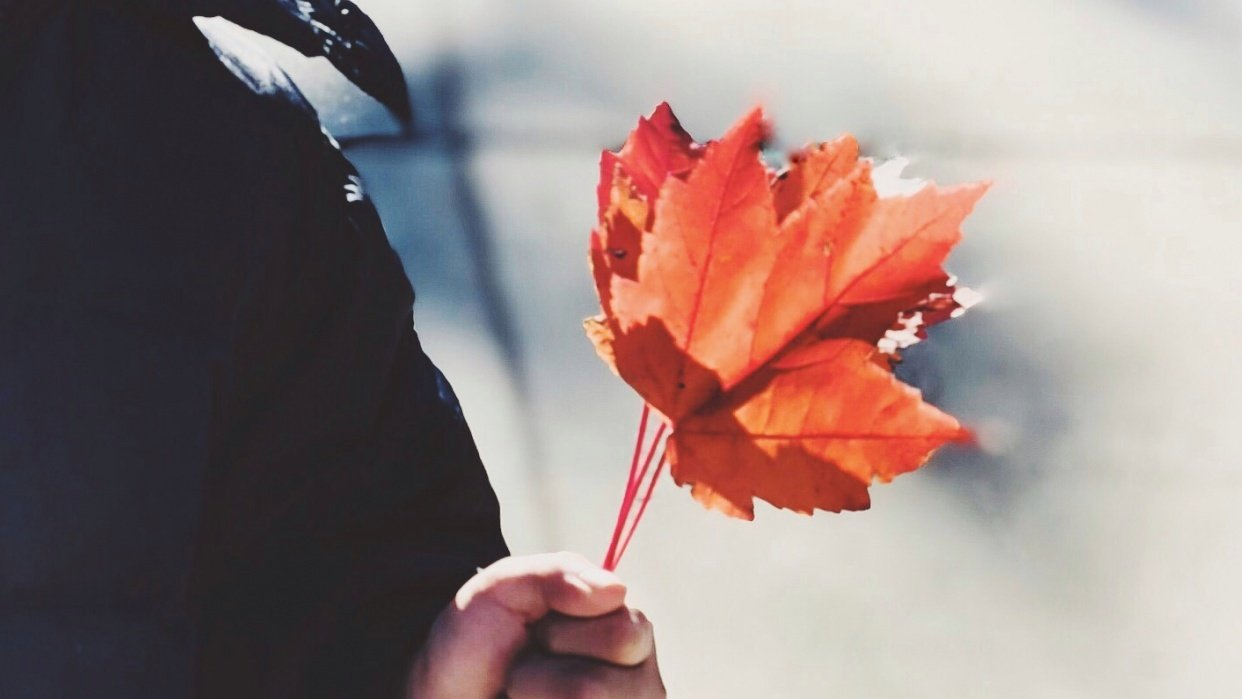 iPhone photo+edit project: Last Autumn - student project