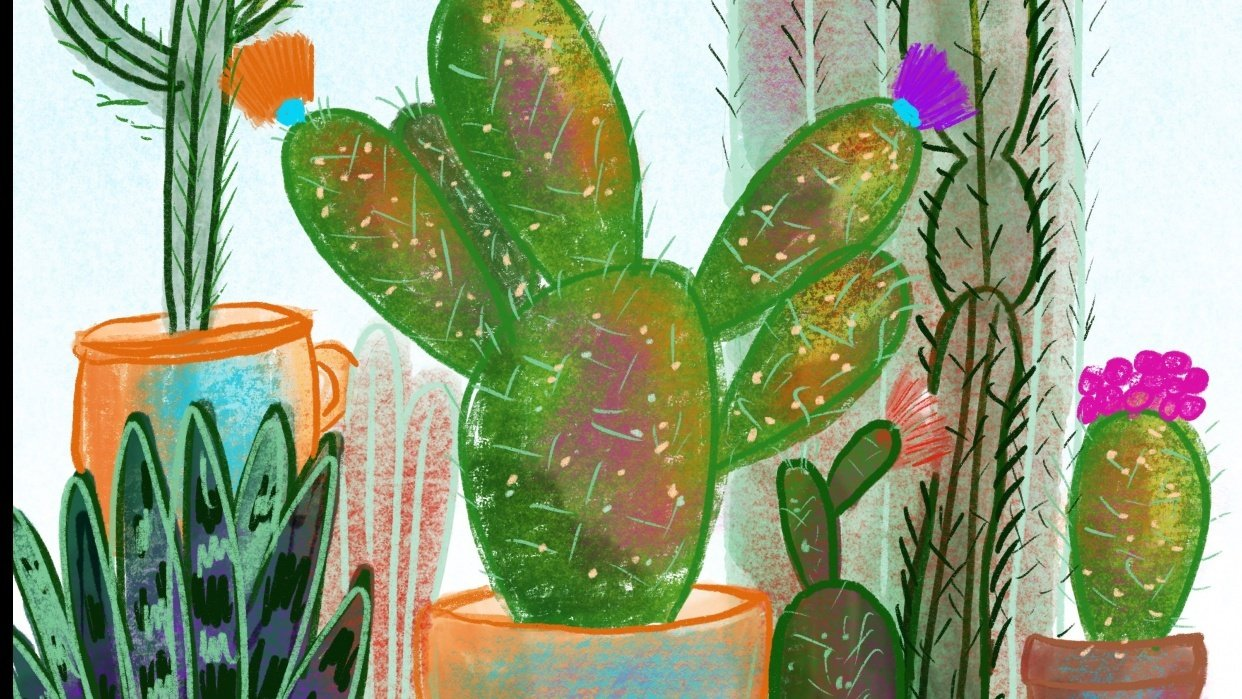 Cacti Garden - student project