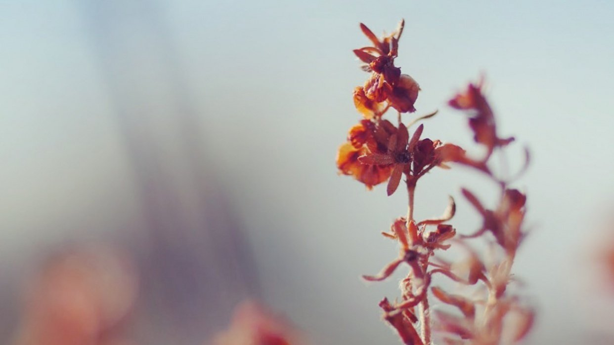 Flower Photography - student project