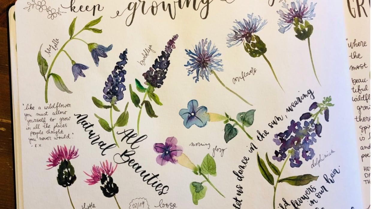 Wildflower studies - student project