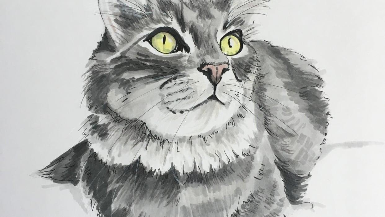 Grey Cat - student project