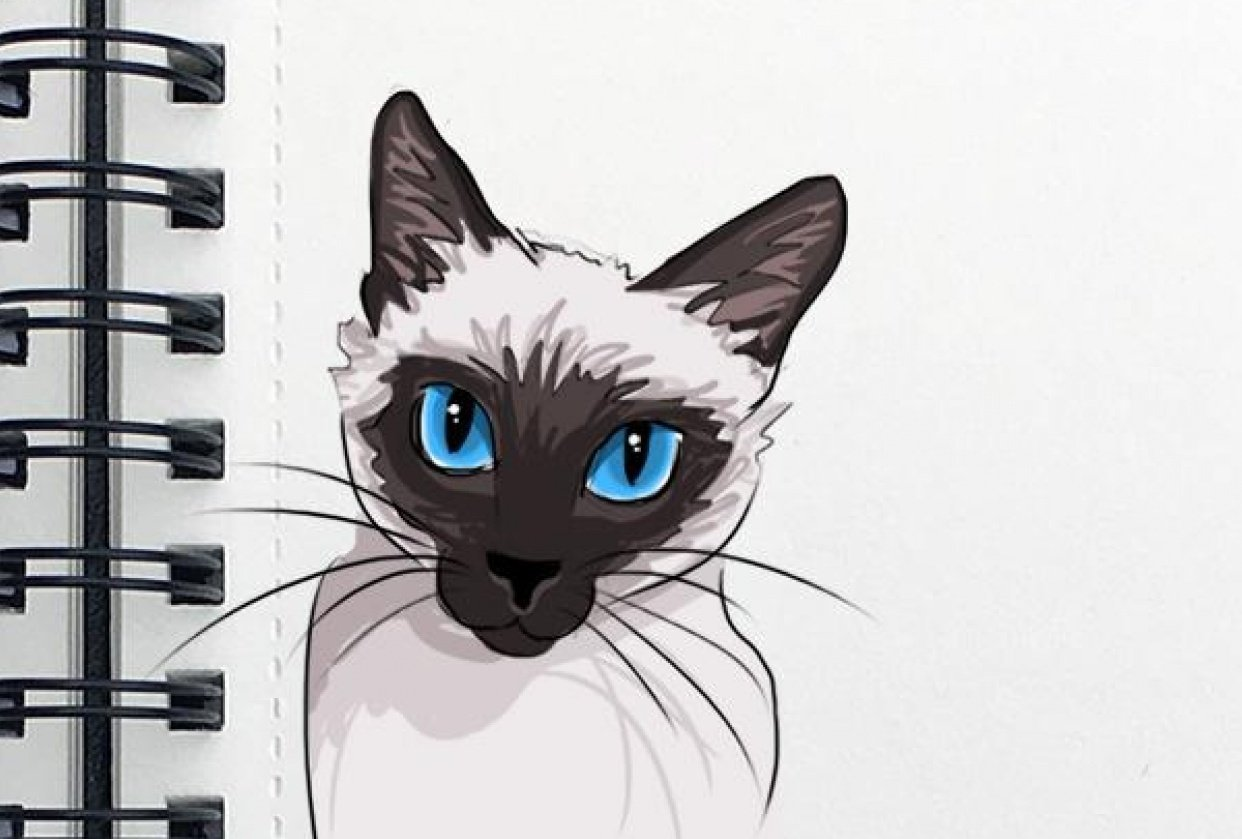Animal Study: Drawing Cats - student project