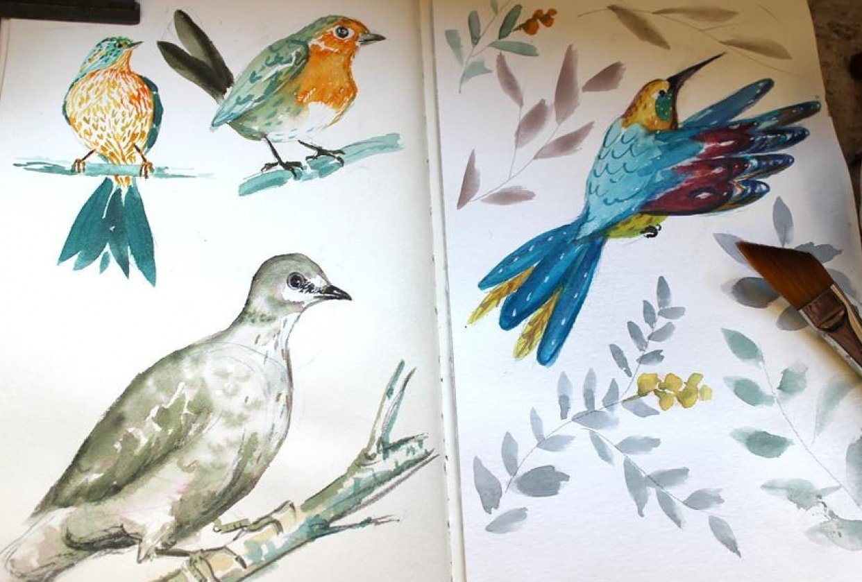 Colourful Birds - student project