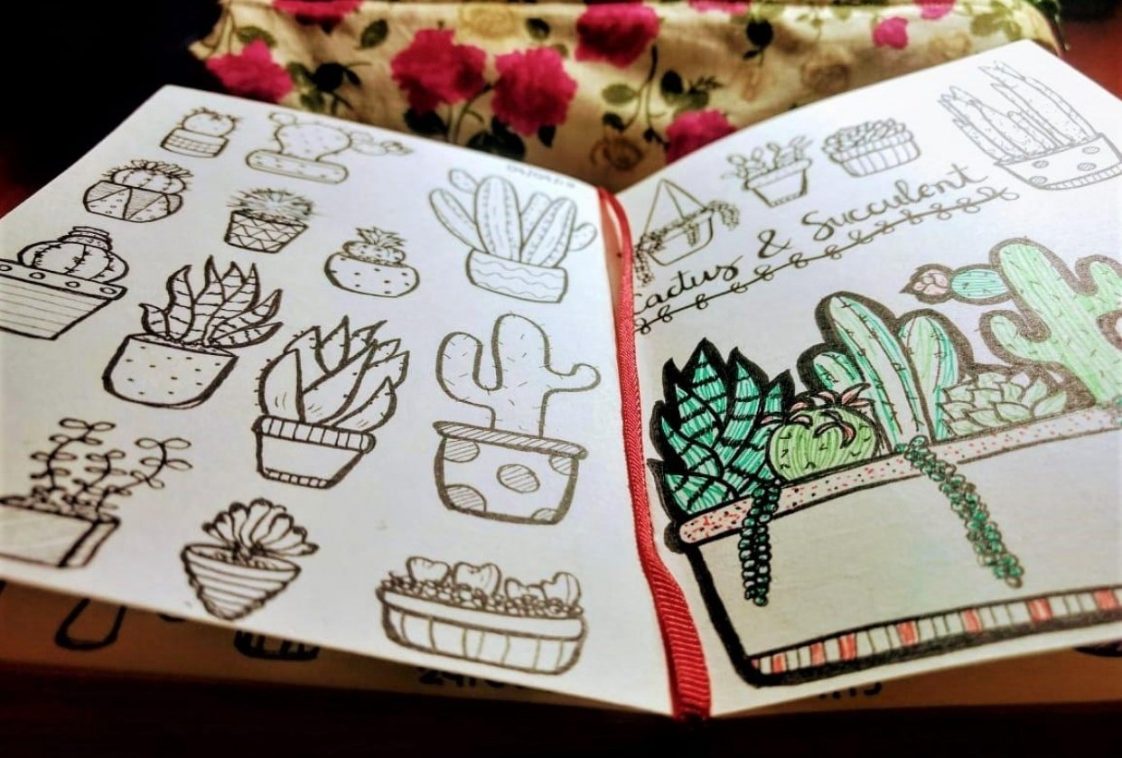 Line Drawing: Cactus & Succulent - student project