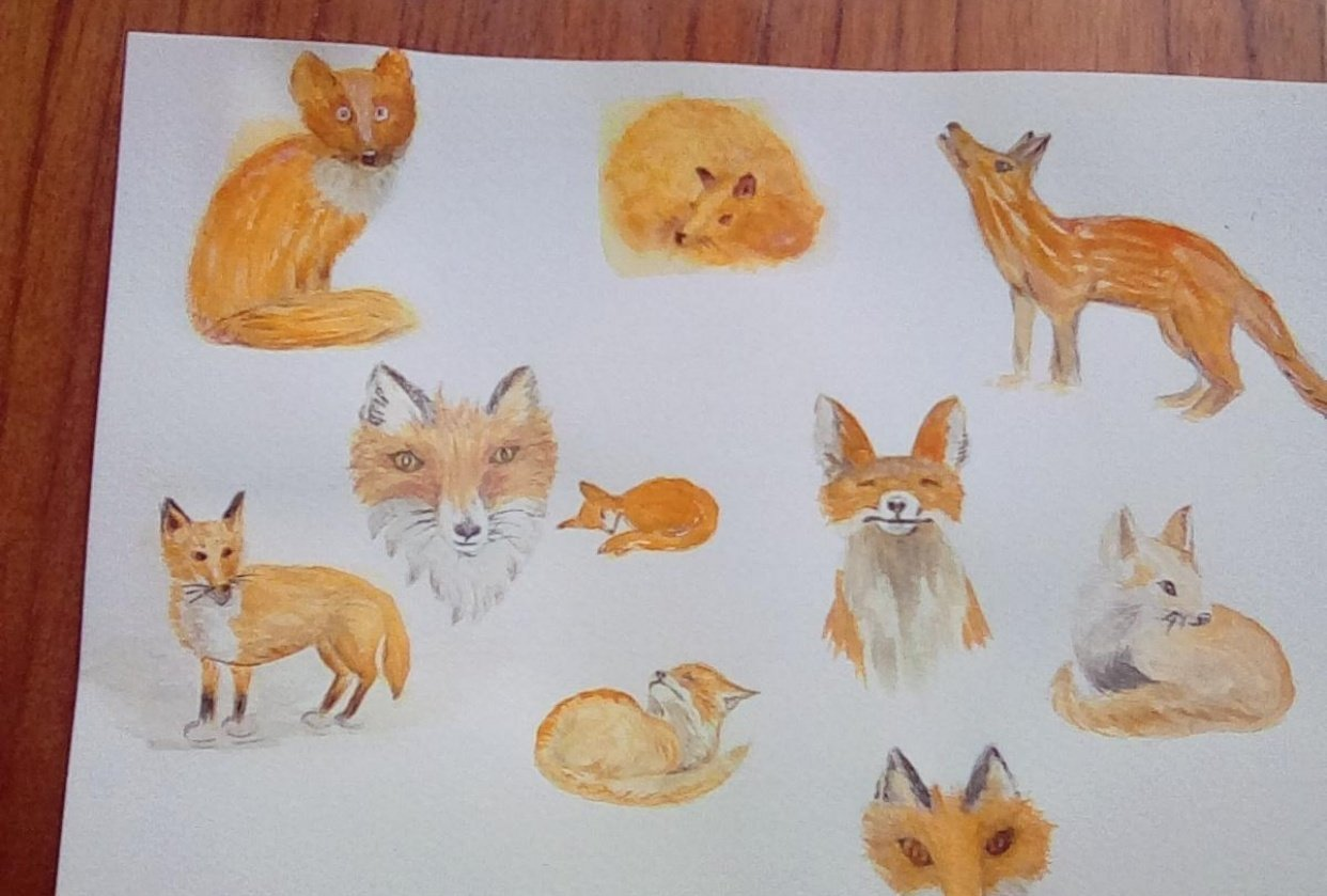 Fluffy foxes - student project