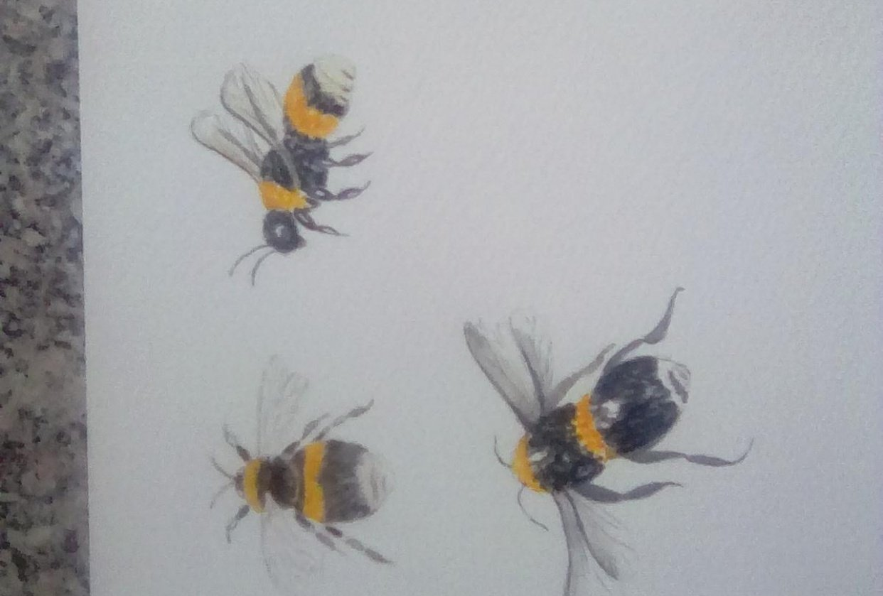 Watercolour bees - student project