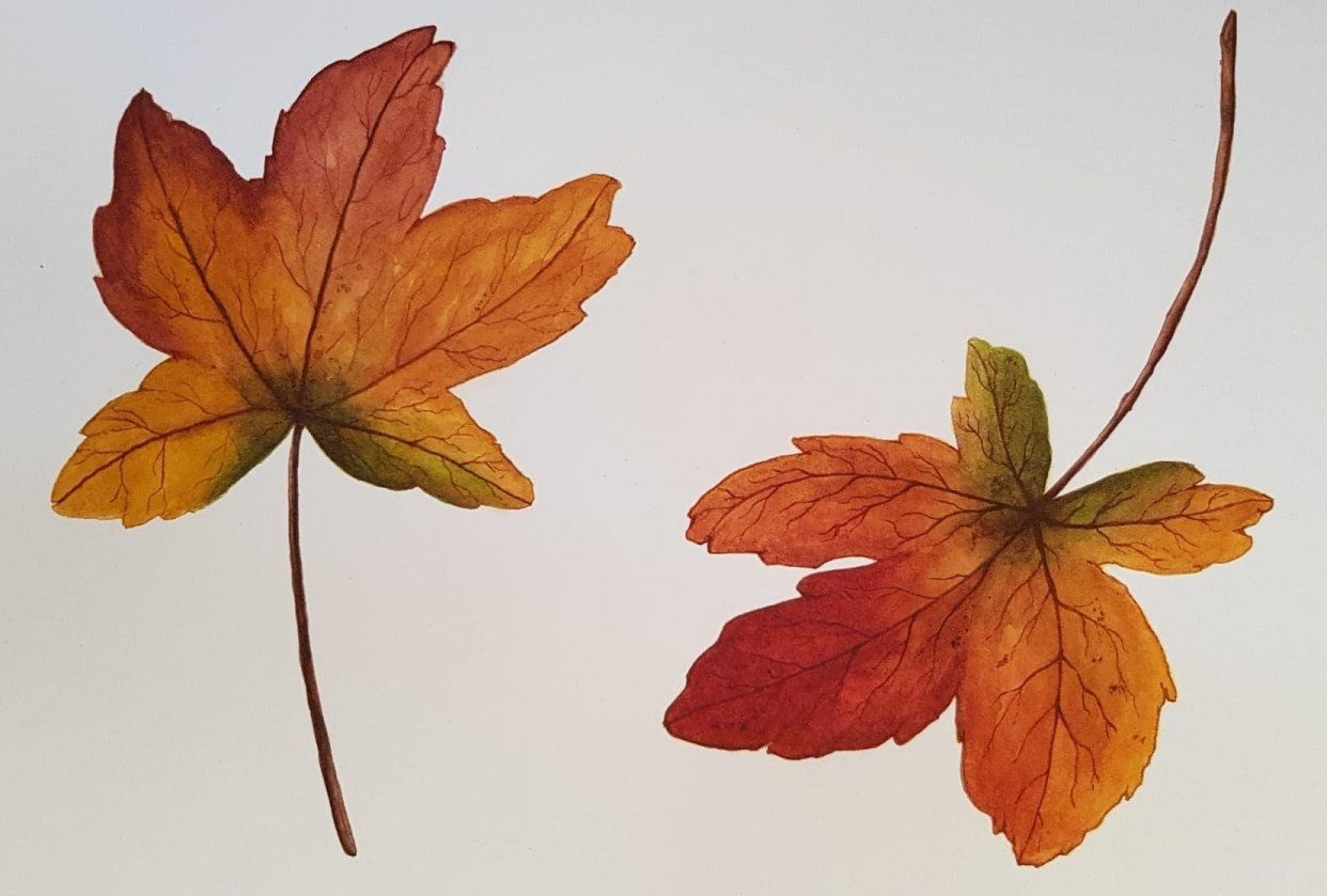 Autumn Leaves 07/04/2019 - student project