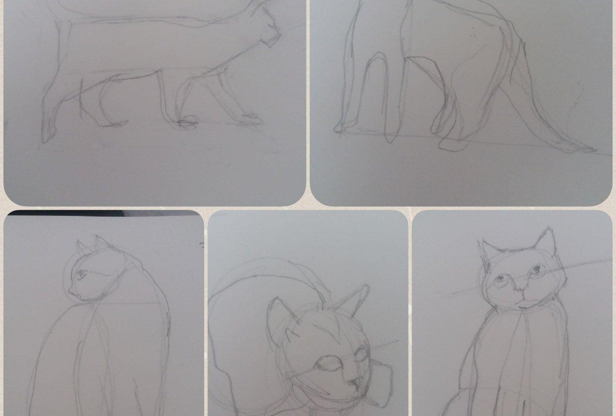 Animal Study - Drawing cats #skillshareclass - student project