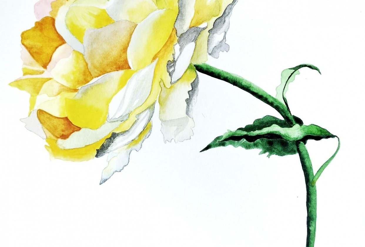 Watercolor Yellow Rose - student project